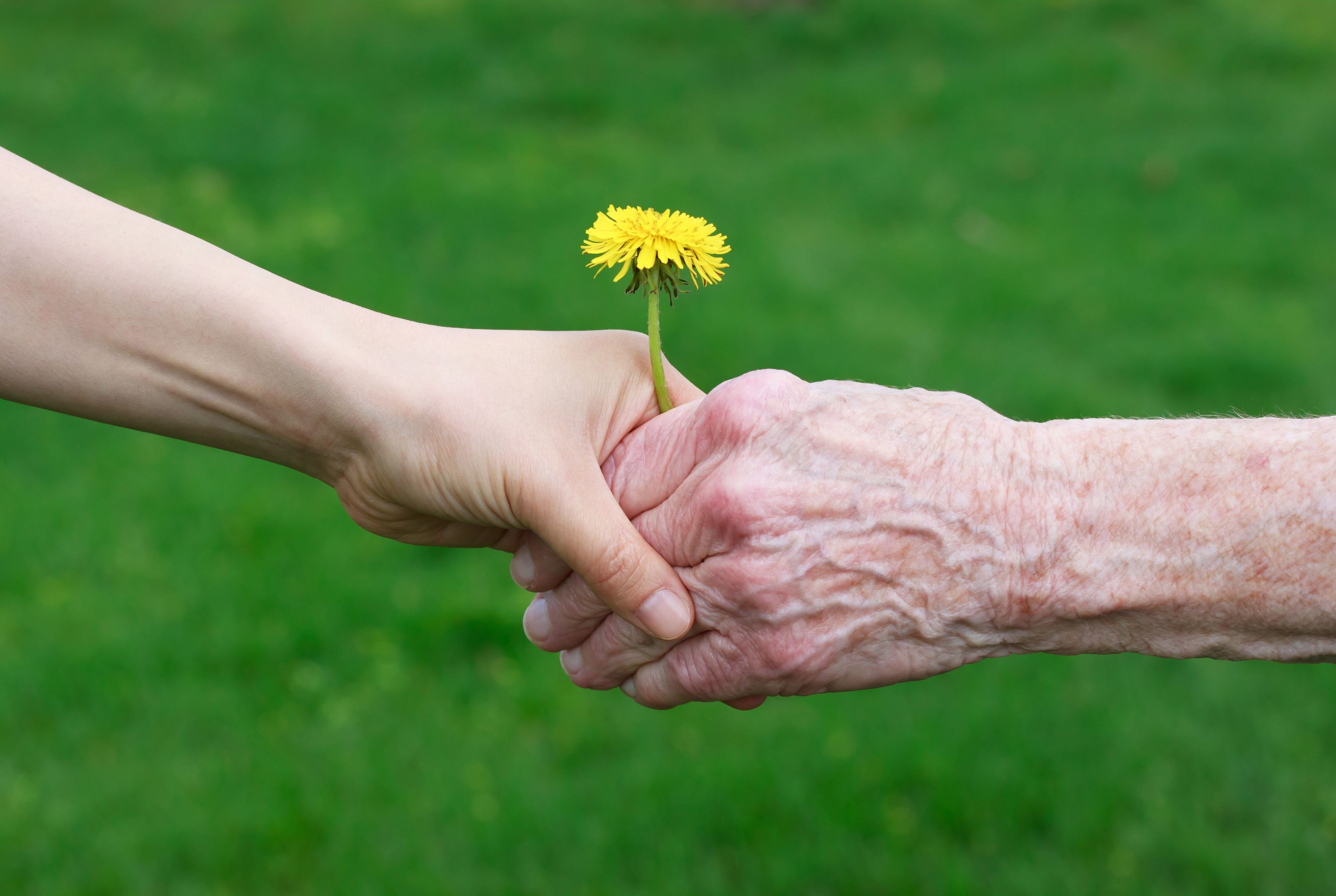 Absentee Non Medical Home Care Agency in South Bay