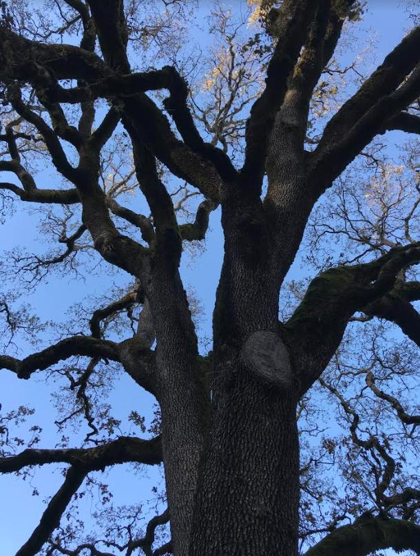 Established Profitable Tree Service, $186K SDE