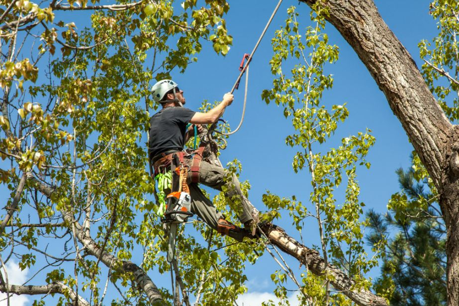 Tree Service Business: 2018 cash flow is up 100%