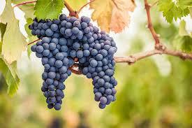 Exclusive winery, vineyard and wine club