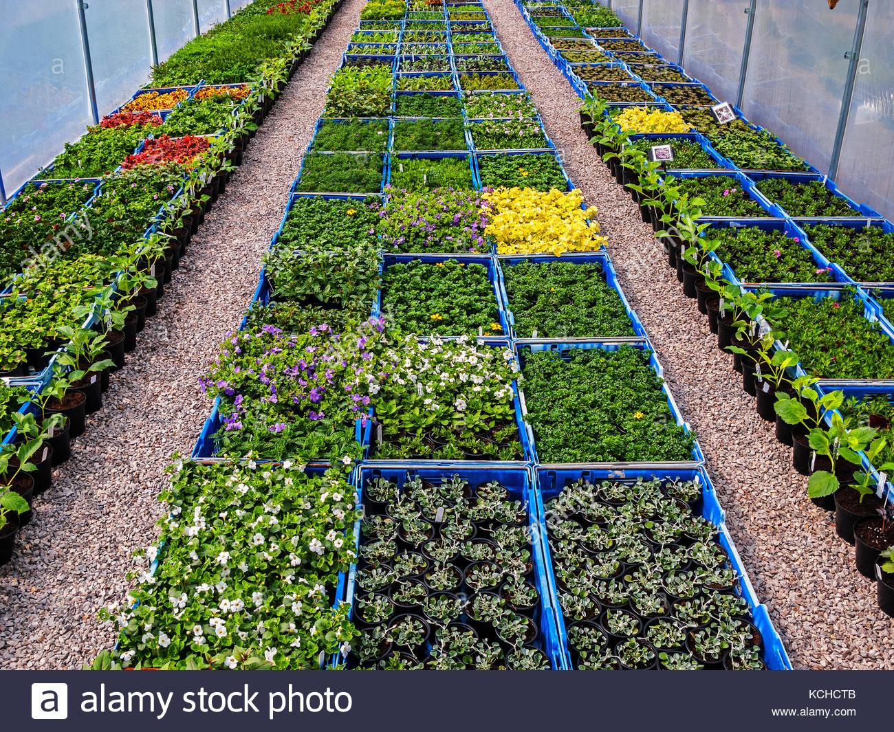 Independent Nursery & Landscape Design Contractor