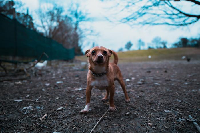 Canine Cantina Franchise