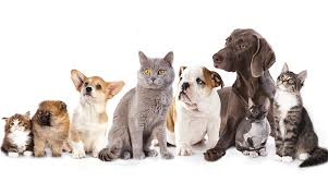 Full Service Petcare with $189k in income