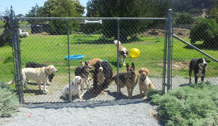 dog kennel business for sale