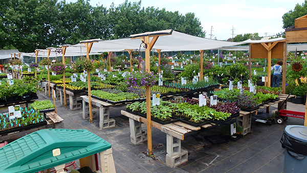 Direct to Consumer eCommerce Grower-Nursery